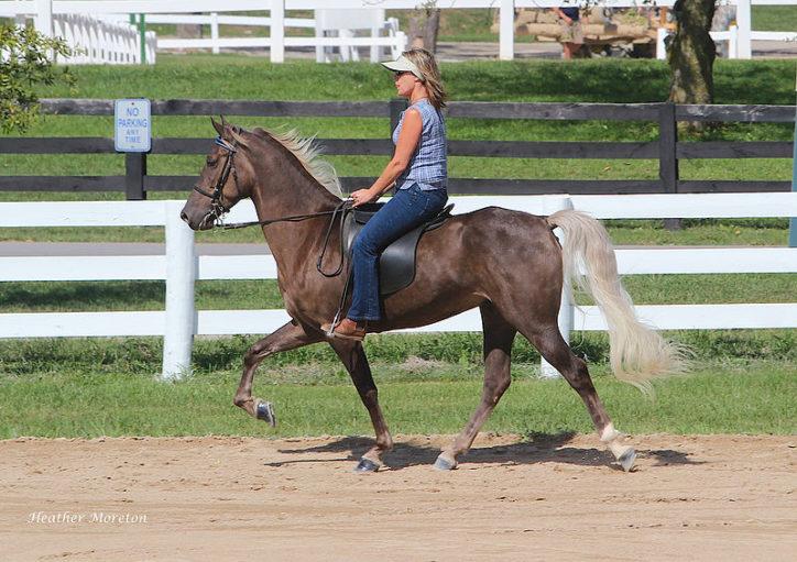 Fichier:Rocky Mountain Horse (7998159775).jpg