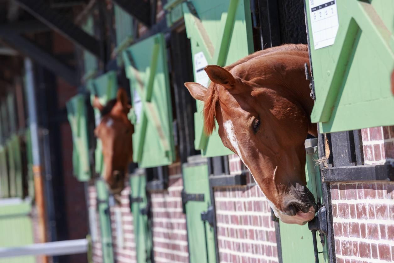 box pour cheval