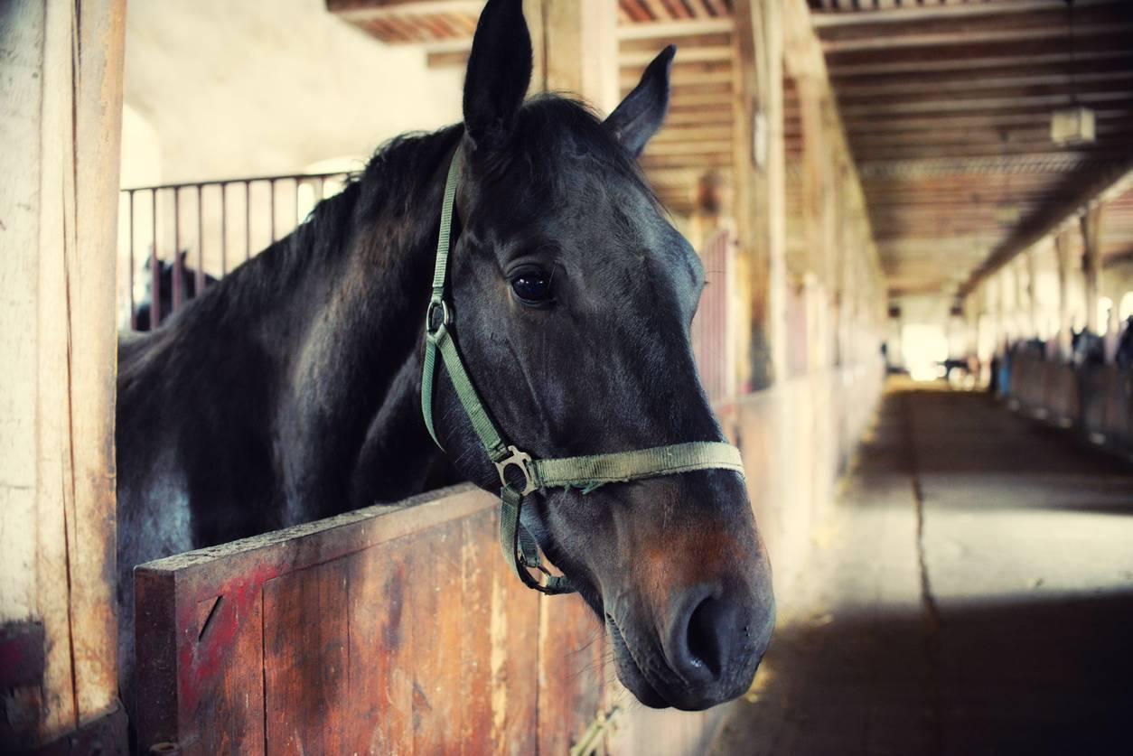 tenture de box personnalisable cheval