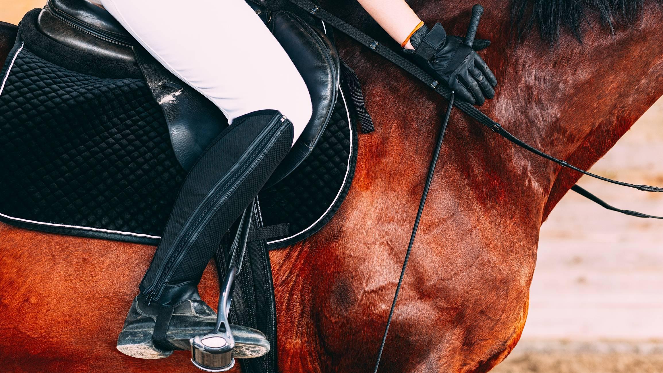posture cavalier cheval