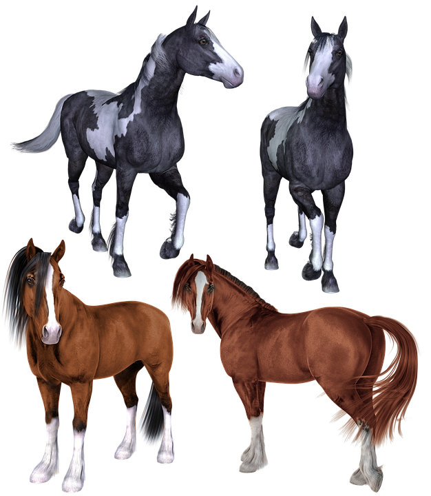 Cheval, Les Chevaux, Mustang, Poney, Poneys, Pinto