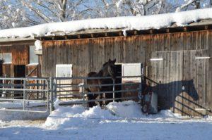 logement cheval