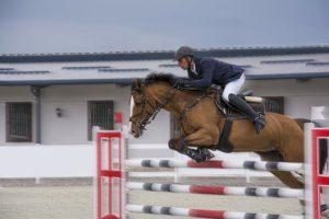 Cheval, Jockey, Le Sport, Des Animaux