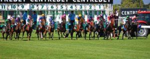 Les Chevaux, Course, Jockey, Le Sport